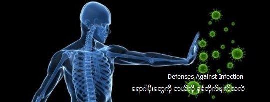 Defenses Against Infection ေရာဂါပိုးေတြကို ဘယ္လို ခုခံတိုက္ဖ်က္သလဲ